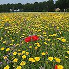 Wild flowers  by Peter Voerman