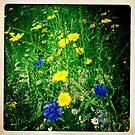 Wild flowers #2 by Peter Voerman