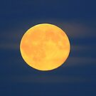 Bleu moon  by Peter Voerman