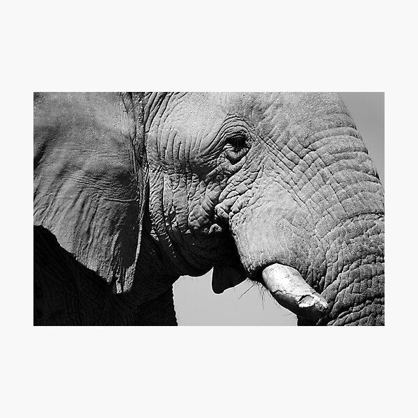 Life Lines - Etosha National Park Photographic Print