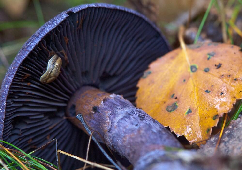 A slug at his work by finnarct