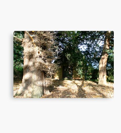 House in the Forset  Canvas Print