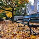 Autumn is Golden by Kevin Cotterell