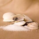 Sea Shells and Sea Salt by SpicieFoodie