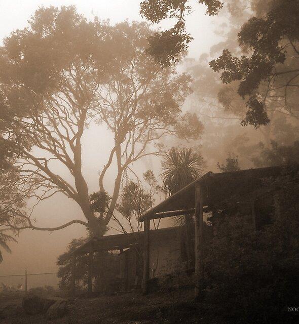 Misty Binna Burra by Jordan Miscamble