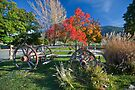 Fall At Los Rios Ranchos, Oak Glen CA by photosbyflood