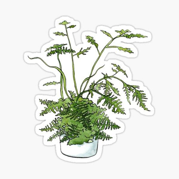 Asparagus Fern Plant Sticker
