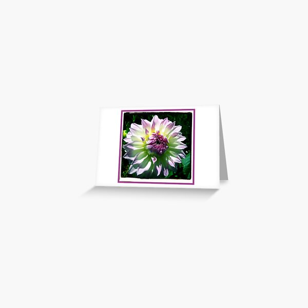 Dahlia  >> Greeting Card