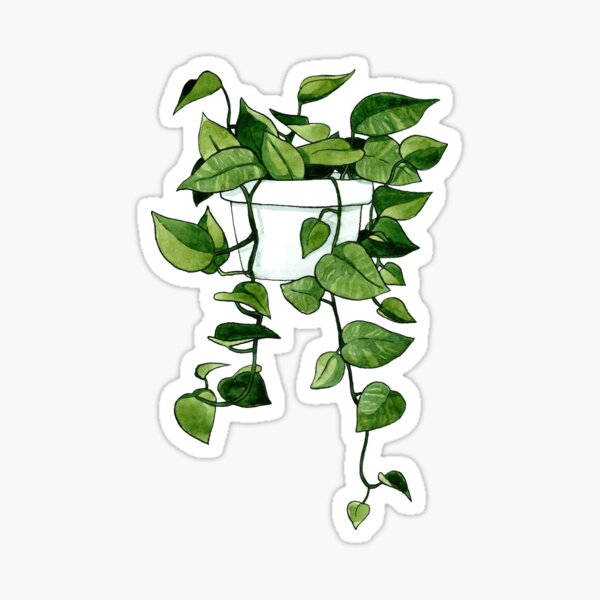 Golden Pothos Plant Sticker