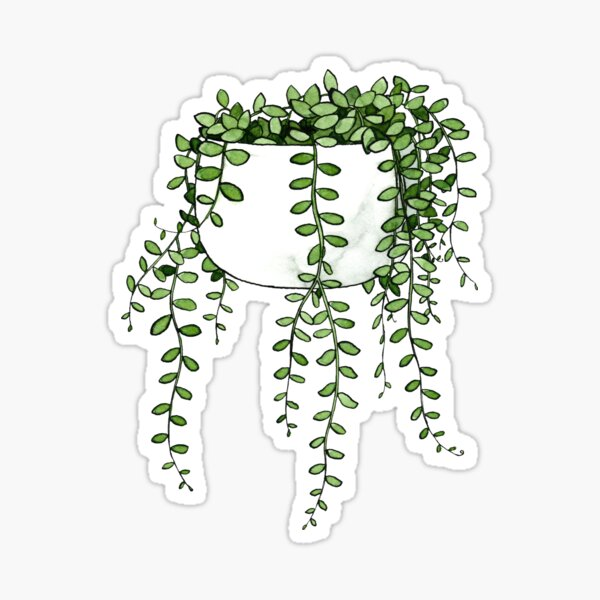 String Of Pearls Plant Sticker