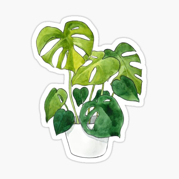 Monstera Deliciosa Plant Sticker