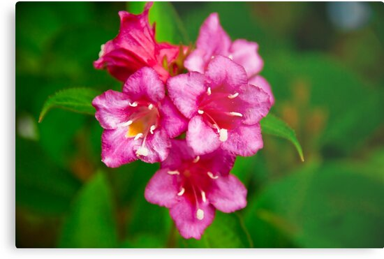 Pink Bell Flowers Metal Prints By Sue Ratcliffe Redbubble