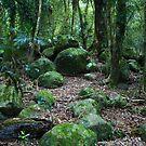 Mossy Boulders - Springbrook N.P by Jordan Miscamble