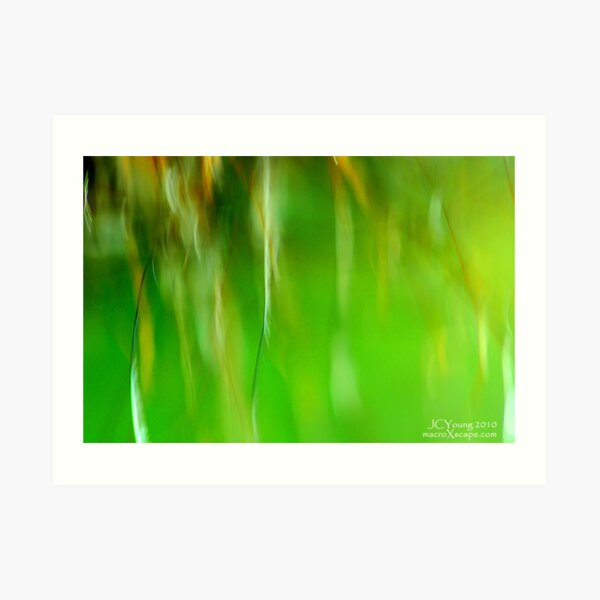 Field of Green Art Print