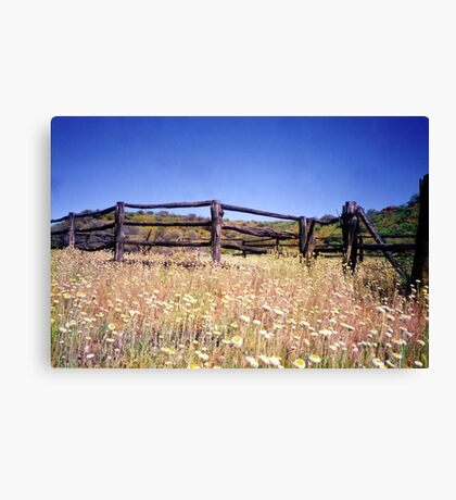 Old Stockyard, Kathleen Springs Canvas Print