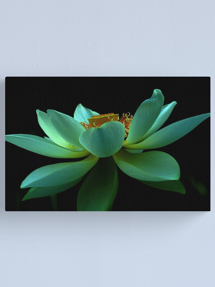 Alternate view of Nelumbo nucifera Canvas Print