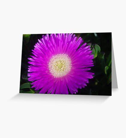 Disphyma crassifolium Greeting Card