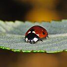 Ladybird & Friend by Gareth Jones