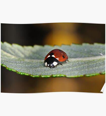 Ladybird & Friend Poster