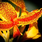 """""""Nature's Vivid Colour"""" - Tiger Lilly by Sophie Lapsley"""