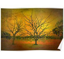 Dead Trees - Barwon River Geelong Poster