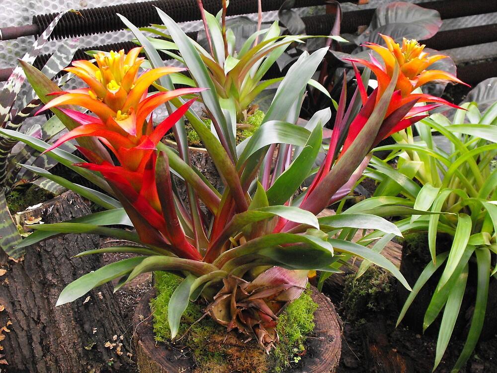 ¿Por qué las plantas tienen flores de colores brillantes - Significado de color de la flor - Jardinería Know How