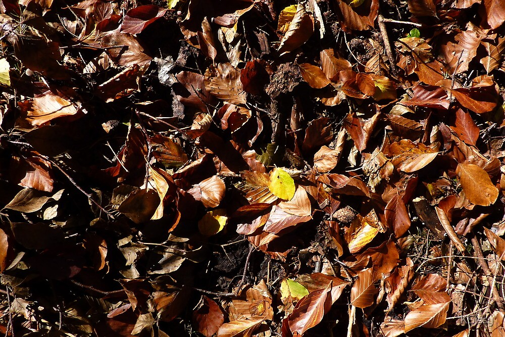 Autumn leaves on ground - brown by KSissy
