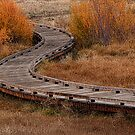 Curve in the Wetlands by Justin Baer