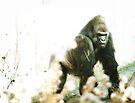 Gorilla by KatsEyePhoto