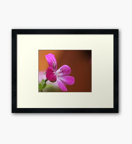 rose geranium Framed Print