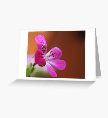 rose geranium Greeting Card