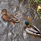 Mrs. and Mr. Duck II by vbk70