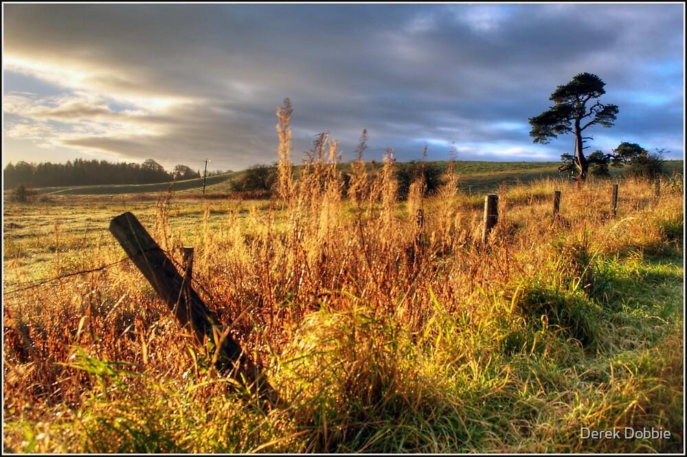 Winter Sun by Derek Dobbie