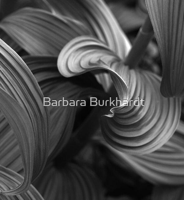 A Foliage Find on Mt Rainier by Barbara Burkhardt