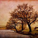 Winter Textures by Ann Garrett