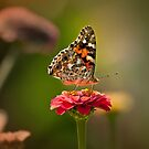 Painted Lady's summer profile by Owed To Nature