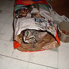 kitty discovers the catfood bag by califpoppy1621