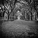 Walking in Central Park  by Andrea Rapisarda