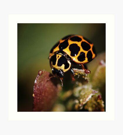 Ladybird looking for love Art Print