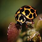 Ladybird looking for love by Rhana Griffin