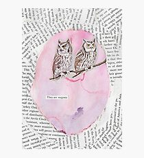 Majestic Owls Photographic Print