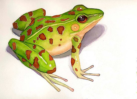Leopard Frog by Greg  Marquez