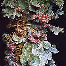 Colony of Tasmanian Lichen by dyas