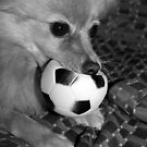 dont you come near my ball...... by Evette Lisle