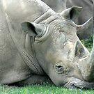 rhino by Leeanne Middleton