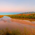 The Bosque at Rio Rancho by Mitchell Tillison