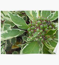 Little Green Seeds Poster