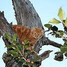 Up A Tree by DebbieCHayes