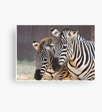 Zebra Mama und Baby Leinwanddruck