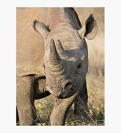 Black Rhino Close Up  Photographic Print